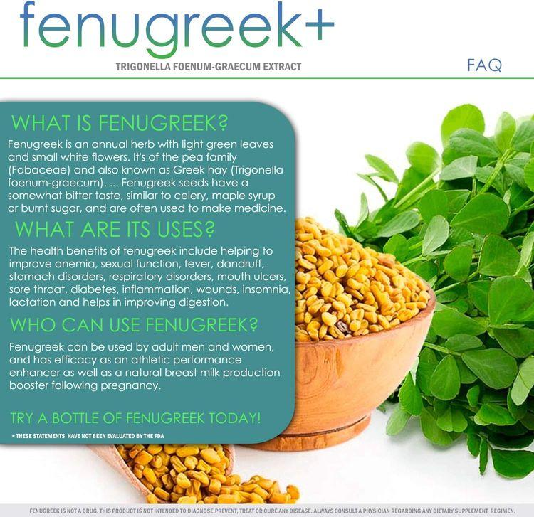 Fenugreek+ | 1400mg Capsules | 60 Capsules Extract Powder
